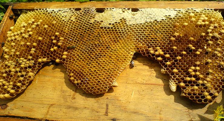 Подготовка пчел к зимовке: основные ошибки