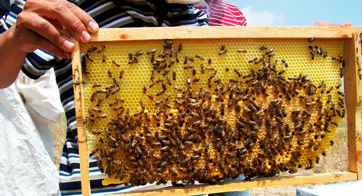 Подготовка пчелосемей к зимовке