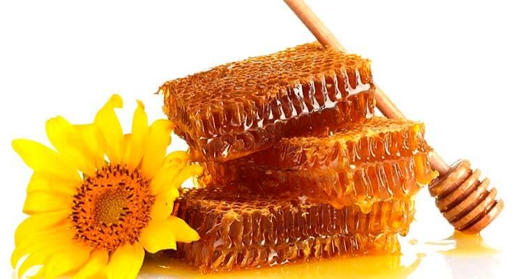 Для чего пчёлы производят мёд