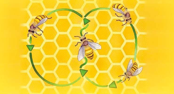 Удивительный танец пчёл