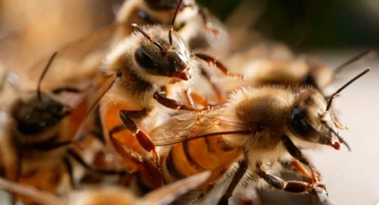 Состав и численность пчелиного семейства
