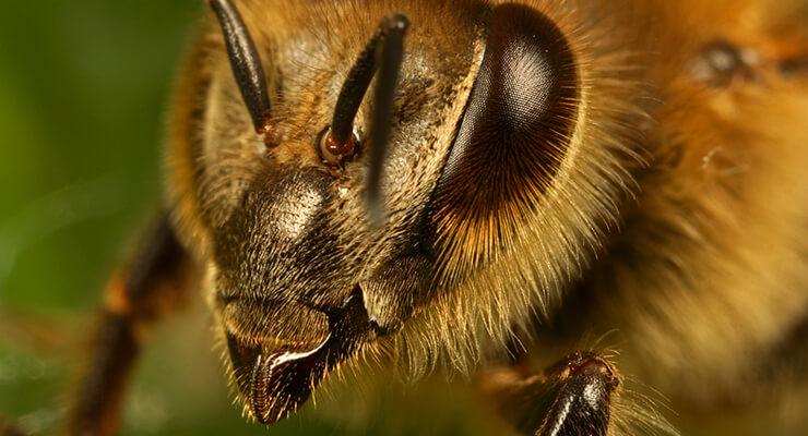 Пчелиная зрительная система