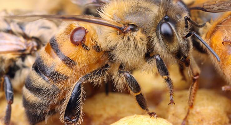 Время обработки пчел бипином осенью
