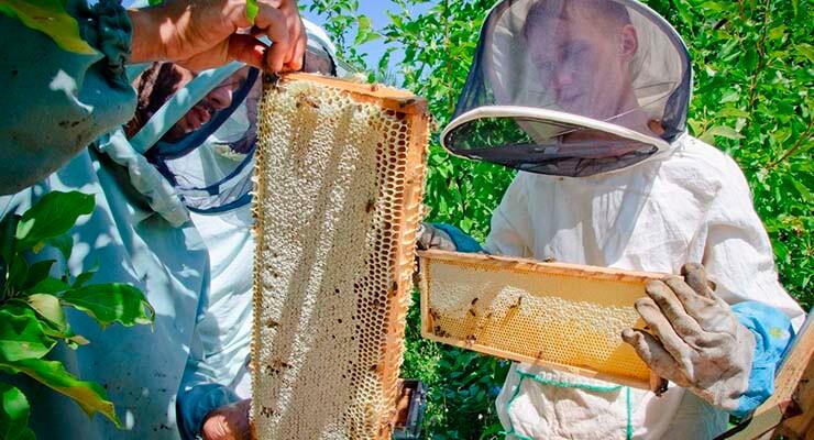 Пчеловодство для начинающих - с чего начать и что нужно знать будущему пчеловоду (видео)