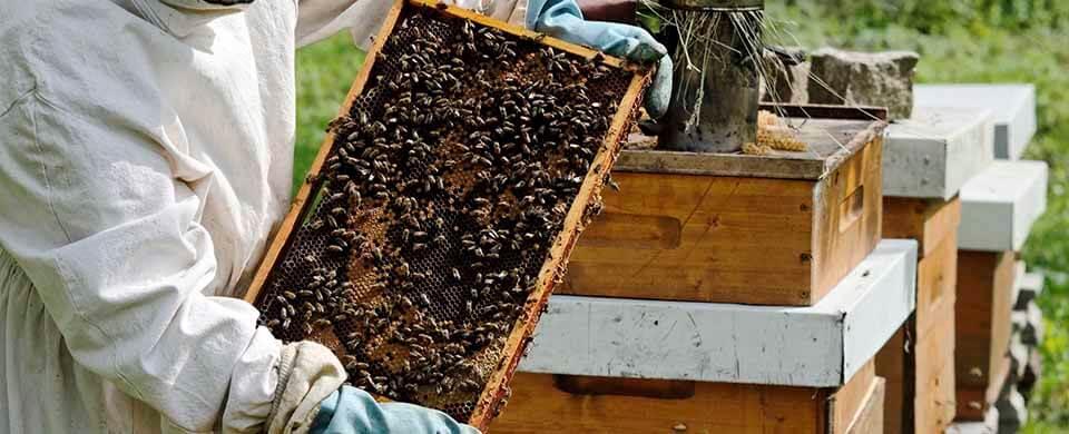 Современное пчеловодство