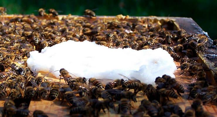 Сроки осенней подкормки пчел