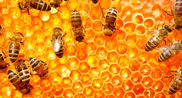 Когда заводить пчел