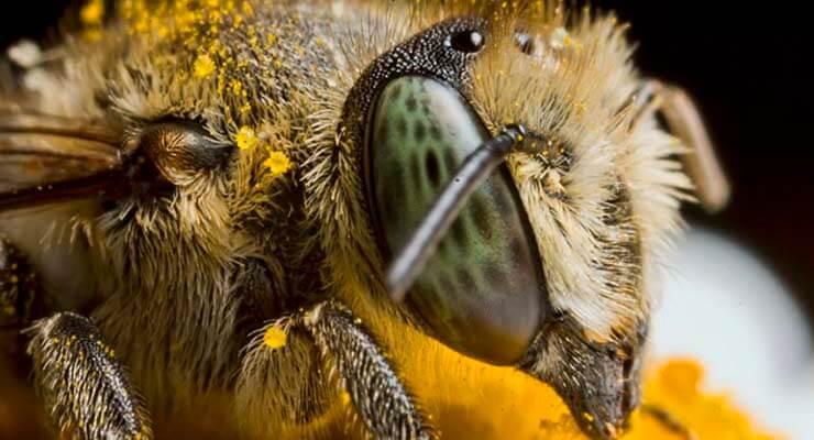 С чего начать разведение пчел и как их содержать?