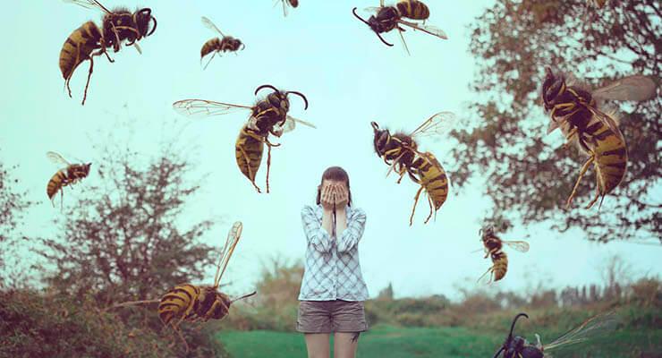 Наиболее вероятные причины нападения пчёл на человека