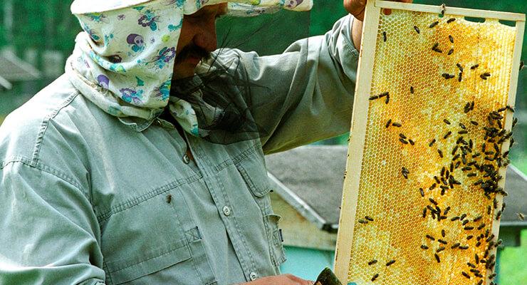 Пчеловодство: бизнес-план