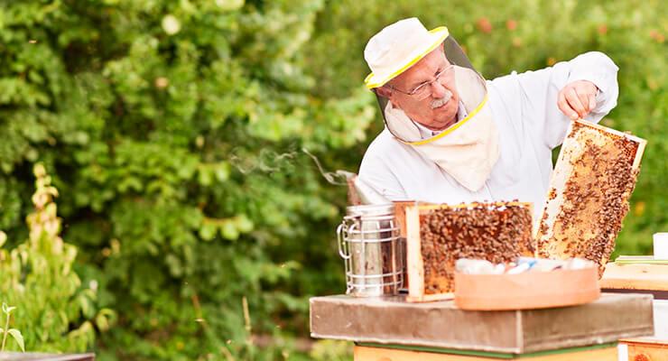 Кому поможет пчелиный подмор