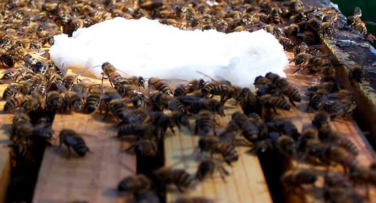 Когда нужна подкормка пчел