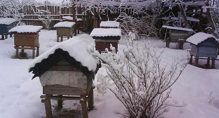 Пчелы зимой: зимовка пчел, гибель, подкормка